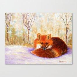 Red fox small nap | Renard roux petite sieste Canvas Print