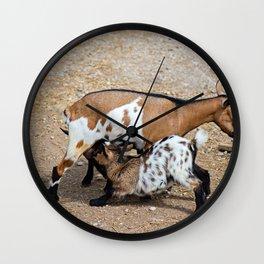 Goat feeds her goatlings, outdoor shooting in good weather Wall Clock