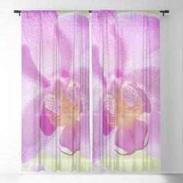 Backlit Iris Sheer Curtain
