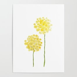 two abstract dandelions watercolor Poster