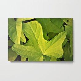 Golden Green Oak Leaves Metal Print