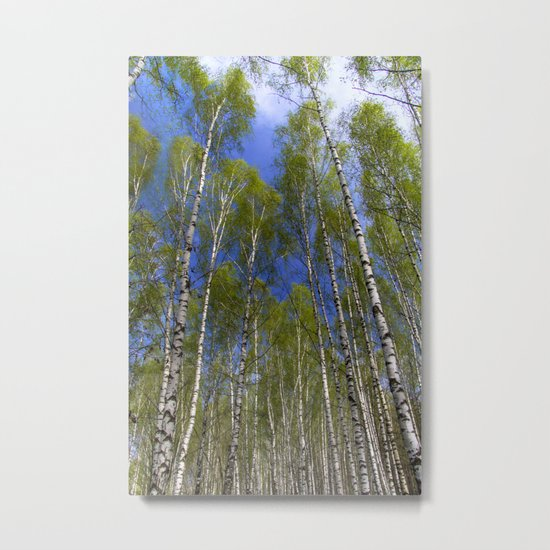 Birchwood#2 Metal Print