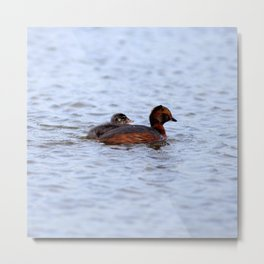 Watercolor Bird, Horned Grebe 06, Lake Myvatn, Iceland Metal Print