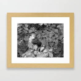 Regal Runt (B&W) Framed Art Print