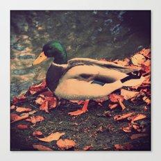 Quack 3 Canvas Print