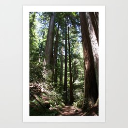Redwood Lined Path Art Print