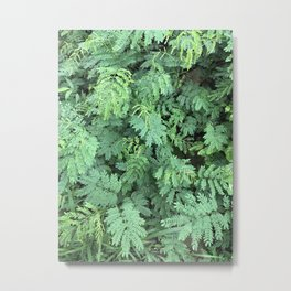 Leafy Gaze Metal Print