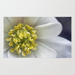 Anemone Macro Rug
