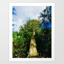 Blessed and Strong Photography Art Print