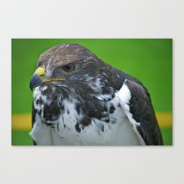Seahawk Canvas Print