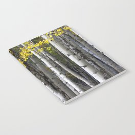 Yellow, Black, and White // Aspen Trees in Crested Butte Notebook