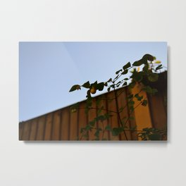Summer Snowberry Metal Print
