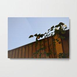 Summer Snowberry Metal Print
