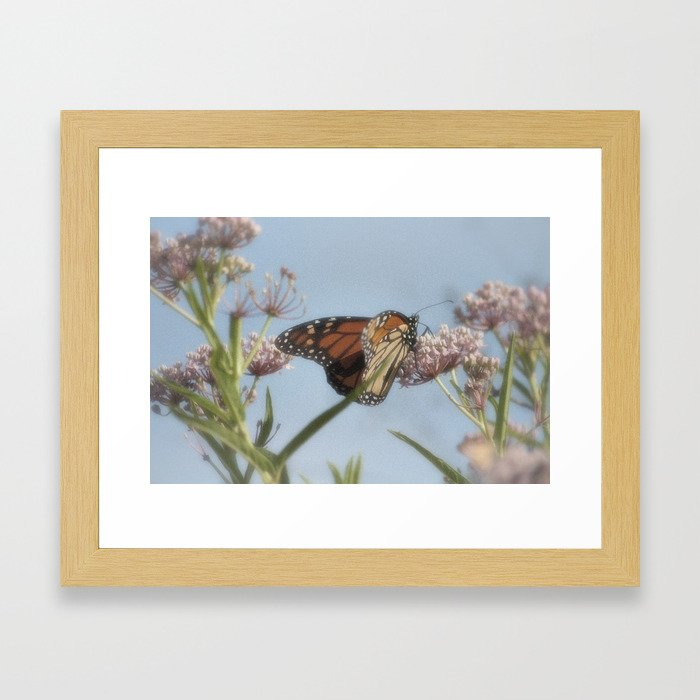 Monarch Butterfly XVII Framed Art Print