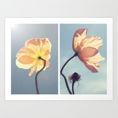 Iceland Poppies Art Print