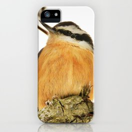 Curious Nuthatch iPhone Case
