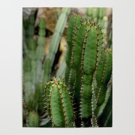 Cactus plants stand together botanical photography no 5 Poster