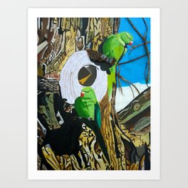 Two Parakeets - large scale Art Print