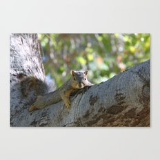 Just Hanging! Canvas Print
