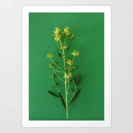 Green summer | Flower Photography Art Print
