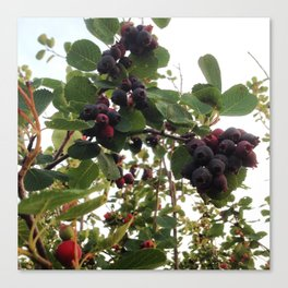 Beautiful Wild Berries Canvas Print