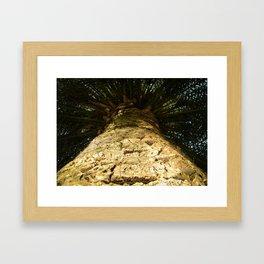 Palms. Framed Art Print