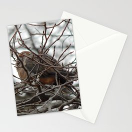 Winter nap Stationery Cards