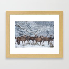 Red deers  from wintry Killarney National Park Framed Art Print