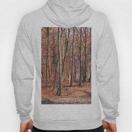 Birch wood in winter Hoody