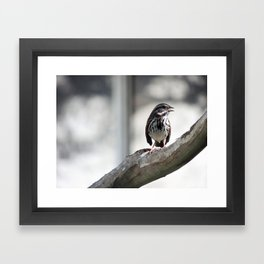 A Restful Chirp Framed Art Print
