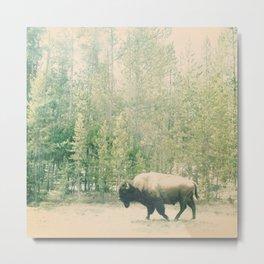 bison I Metal Print