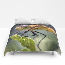Dragonfly Closeup Comforters