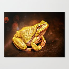 The InFocus Happy Frog Collection III Canvas Print