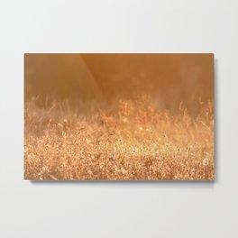 Golden grass field in the summer mountain, sunset wildflowers Metal Print