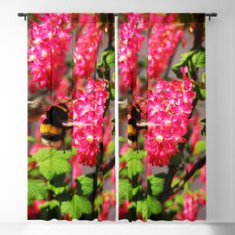 Bumble Bee and Blood Currant Ribes Sanguineum std Blackout Curtain