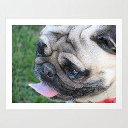 Pug dog face Art Print