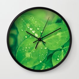 Clover leaf in the rain Wall Clock