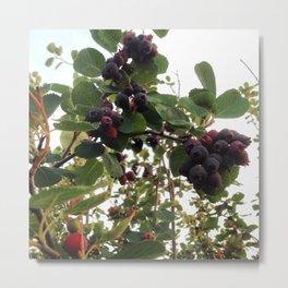 Beautiful Wild Berries Metal Print