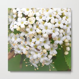 Insects on white wild flowers Metal Print