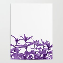 Epic Purple Long Vine Leaves Abstract Minimalist Poster