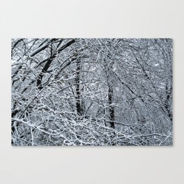 Late Winter Snow Entanglement Canvas Print