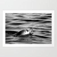 seal Art Prints featuring Seal by Phoebe Jones