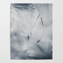 Milkweed abstract Poster