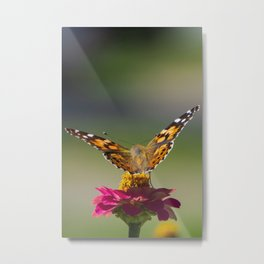 Monarch Butterfly on a Pink Zinnia Metal Print