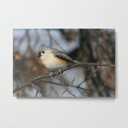 Tufted Titmouse Bird Metal Print