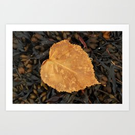 On a bed of sea wrack Art Print