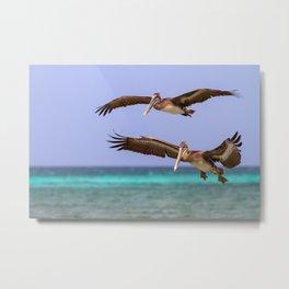 Brown pelicans in flight Metal Print