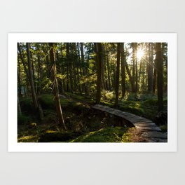 North Shore Trails in the Woods Art Print