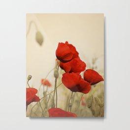 Scarlet Poppies Metal Print