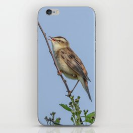 Sedge Warbler iPhone Skin